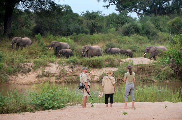 Witness elephants on a walking safari.